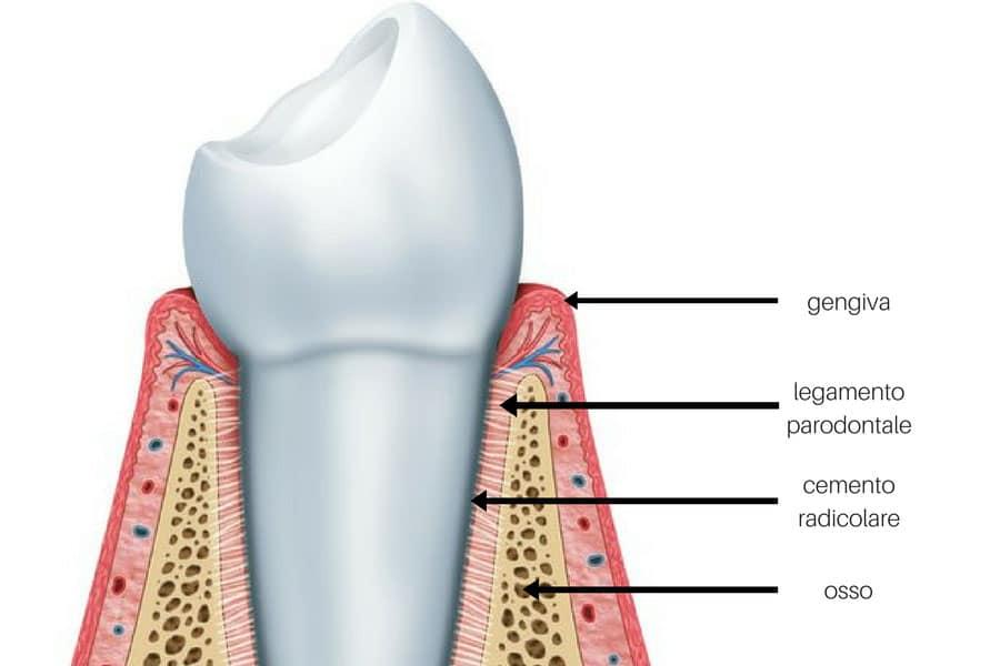 I denti si muovono. Parodontite
