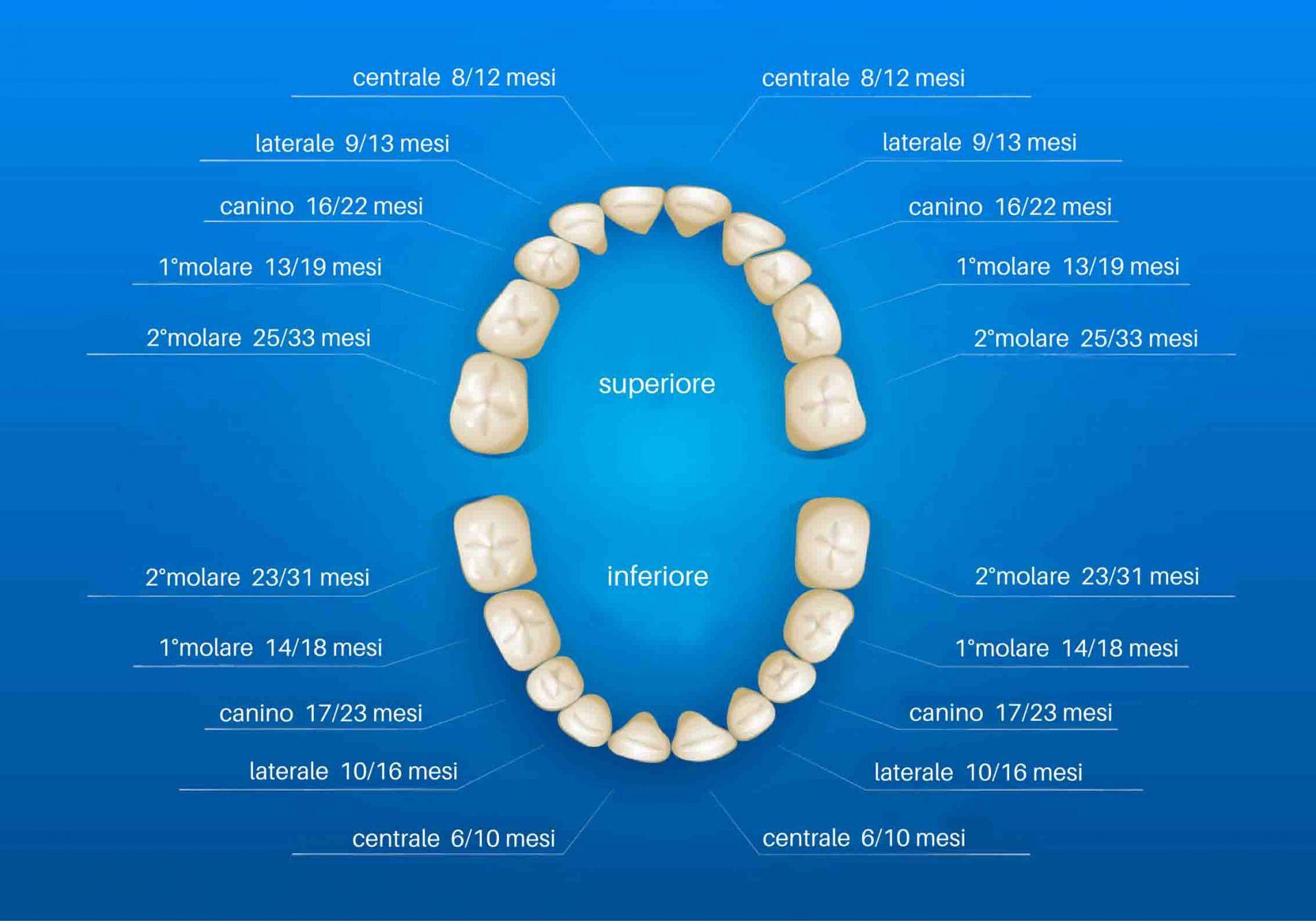 schema denti da latte